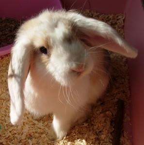 bunny-023a