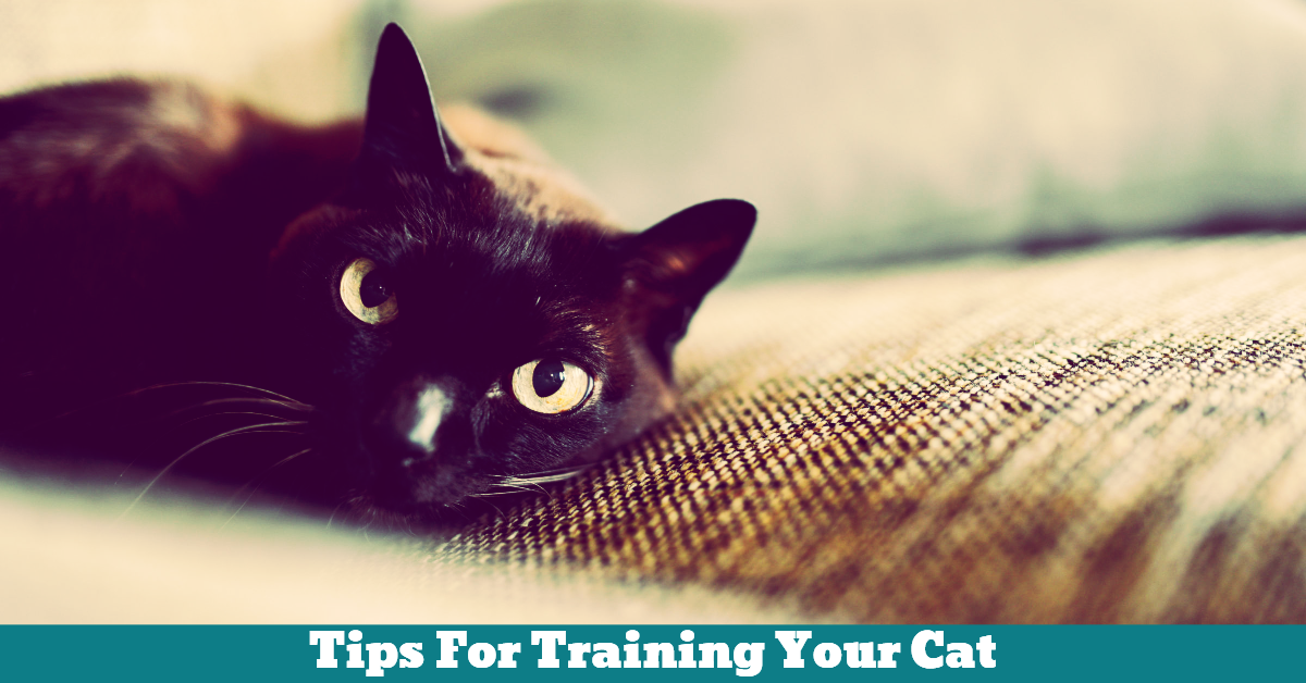 Pet_Cat_Tips_Training
