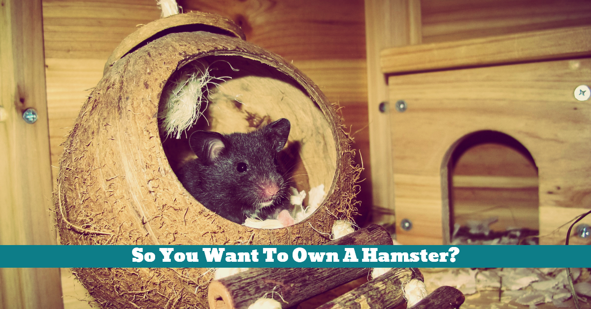 Pet_Hamster_Owners_Guide_Exercise_Ball