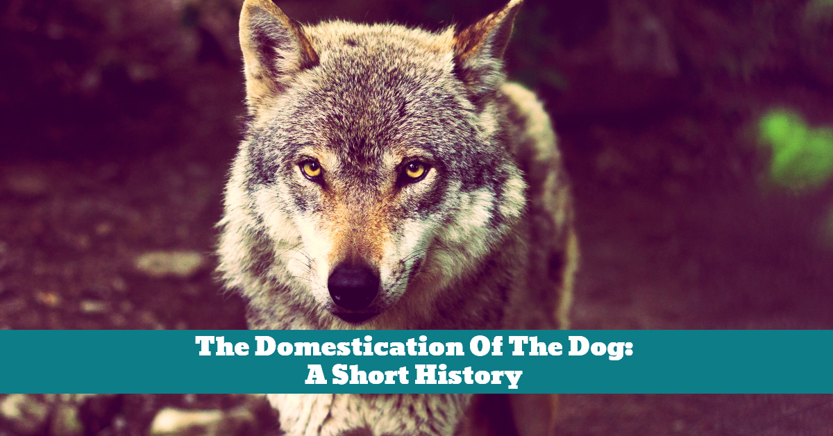 Dog_Domestication_Wolf_Wolves_History