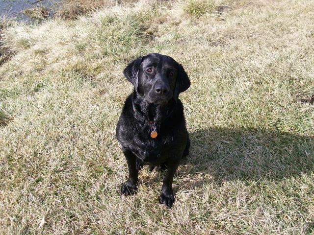 Puppy Buddy 2006