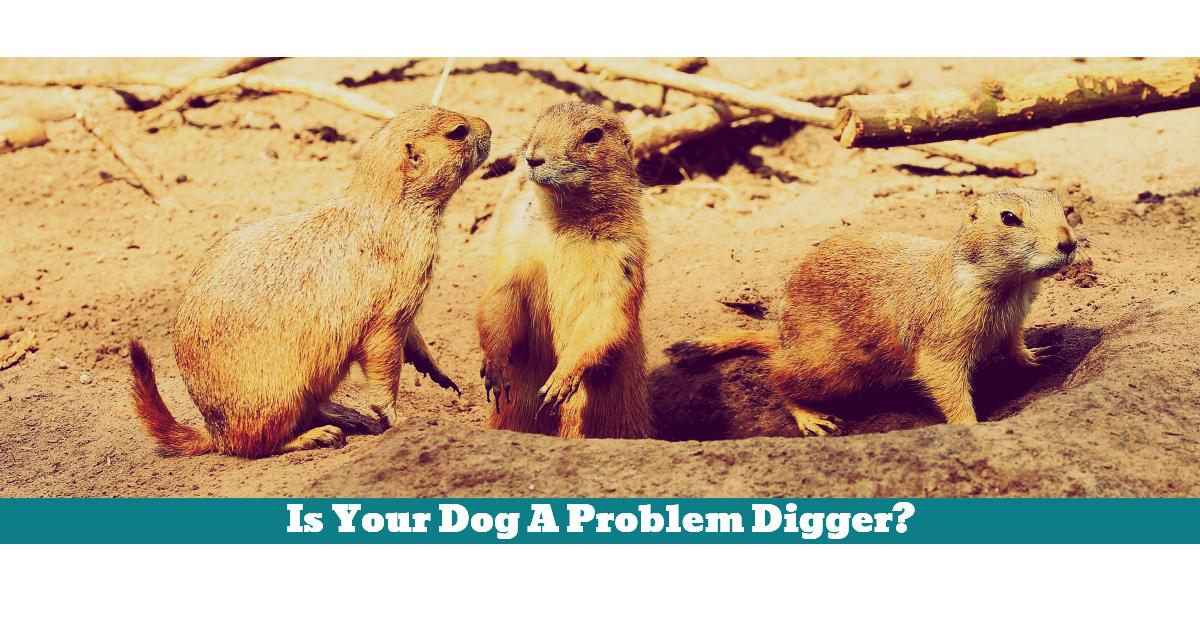 Pet_Dog_Digging_Holes_Garden