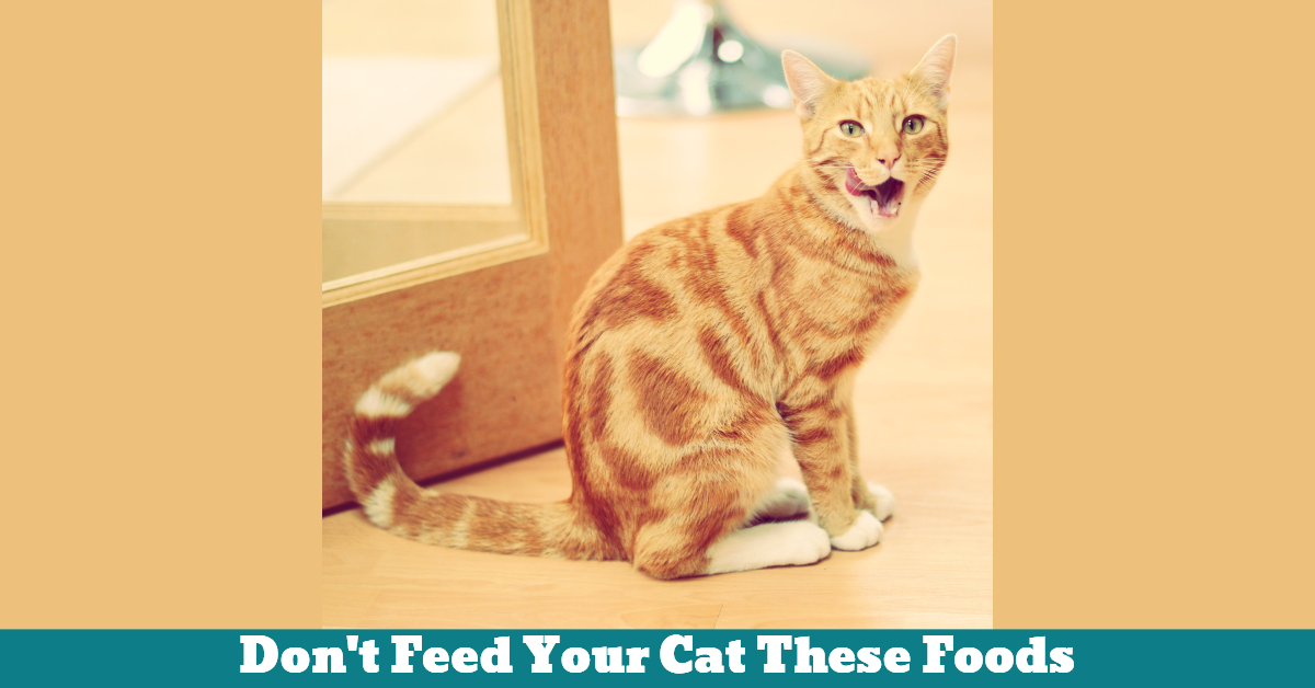 Pet_Cat_Nutrition_Food_Health
