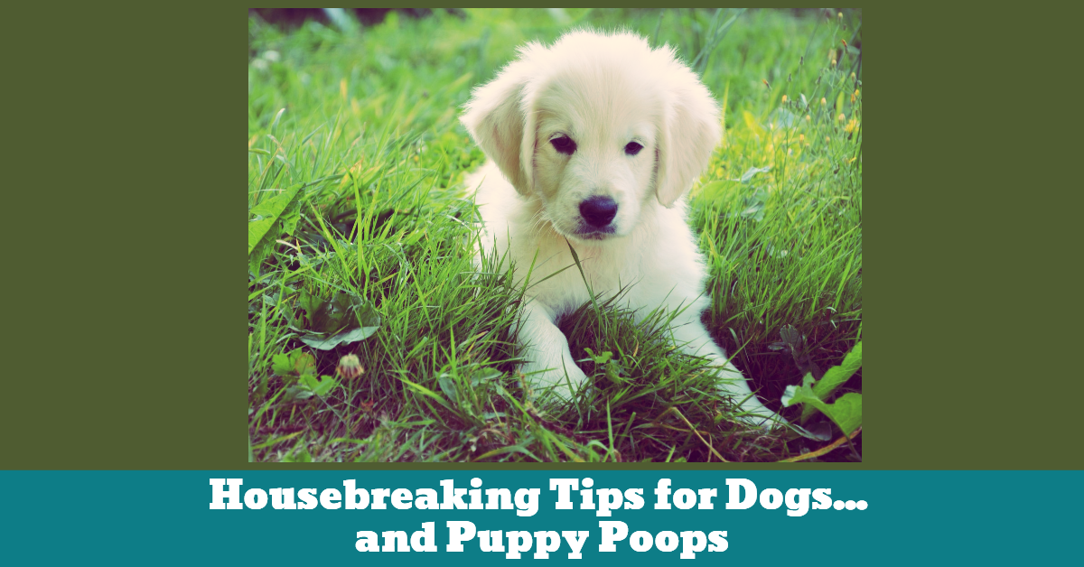 Pet_Dog_Puppy_Training_Housebreaking