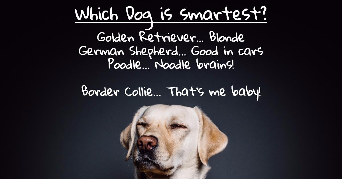 Pet_Dog_Clever_Smart_Intelligent