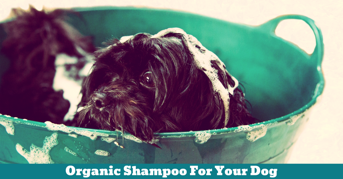 Pet_Dog_Shampoo_Bath_Tub_Wash