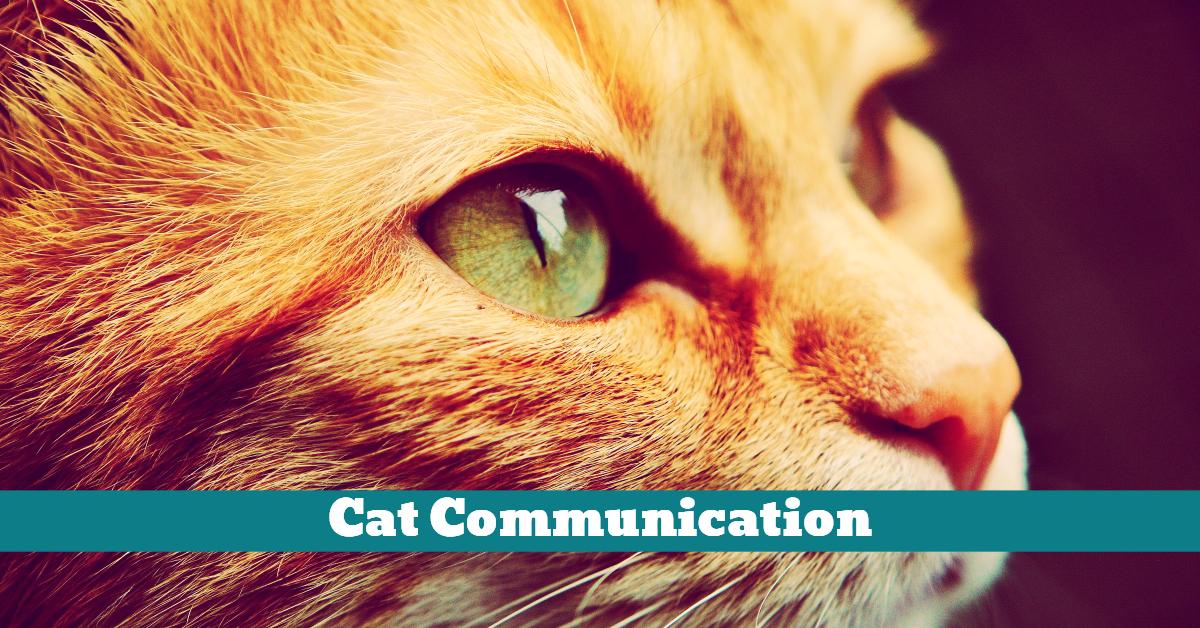 Cat_Communication_Signal_Vocal_Language