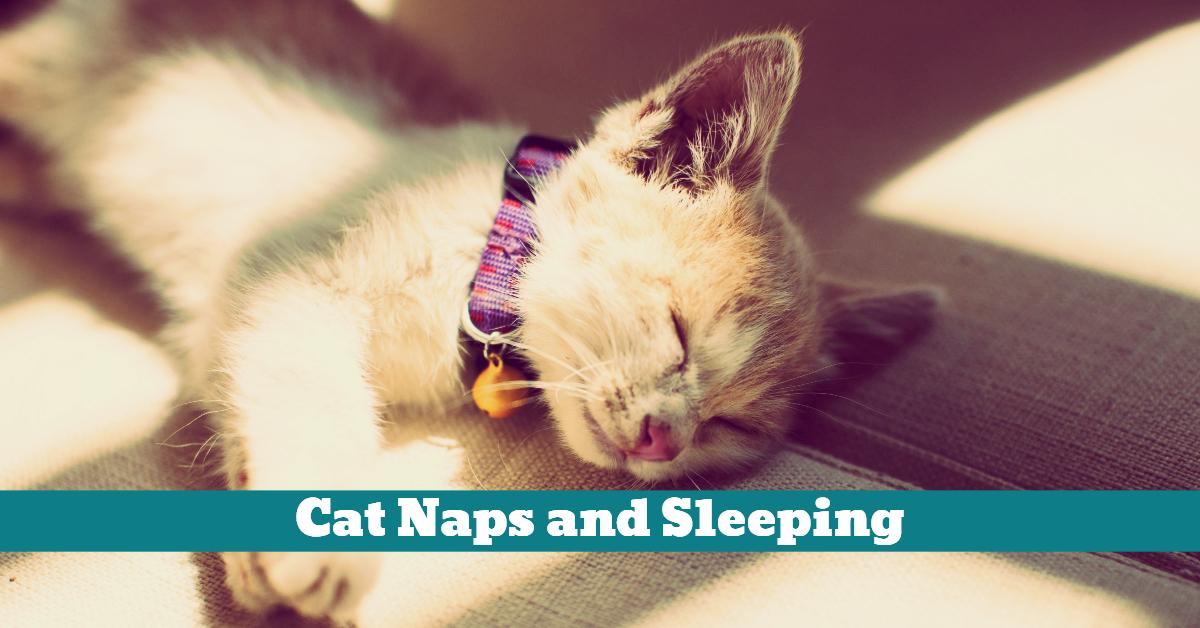 Cat_Kitty_Nap_Sleeping_Sun