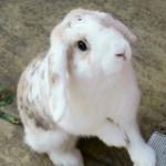 Pet Hooligans Interview: My House Rabbit