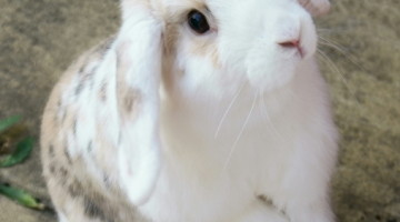 Pet Hooligans Interview: My House Rabbit