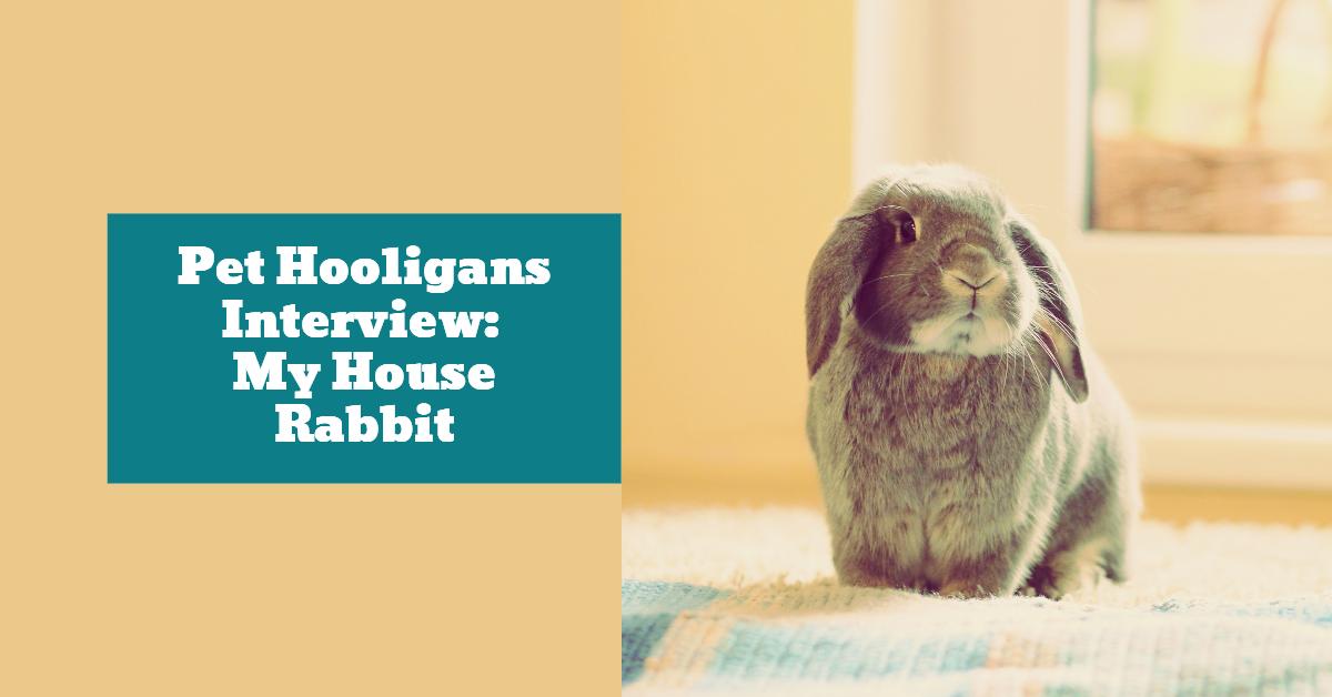Interview_My_House_Rabbit_Abi_Cushman