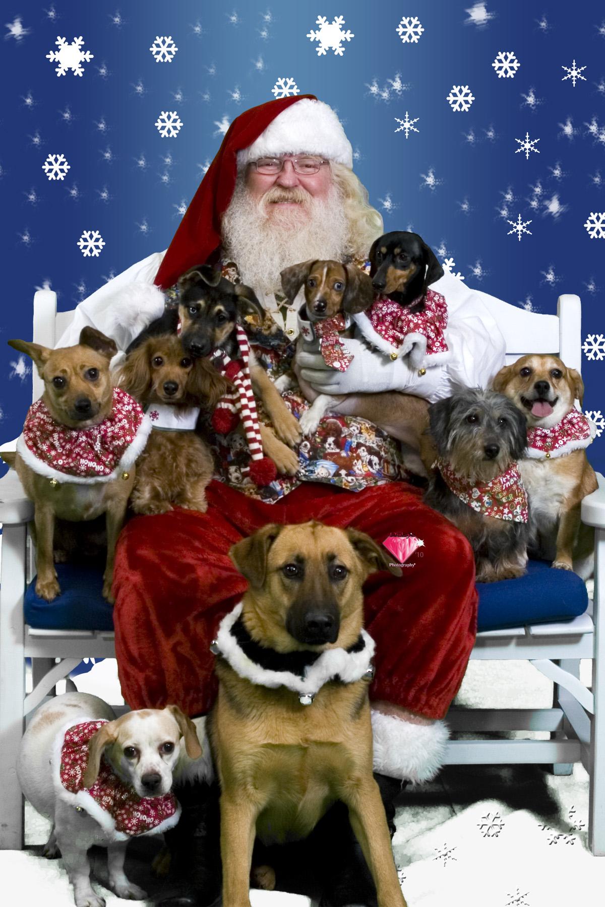 Peace On Earth Santa Pets Dog