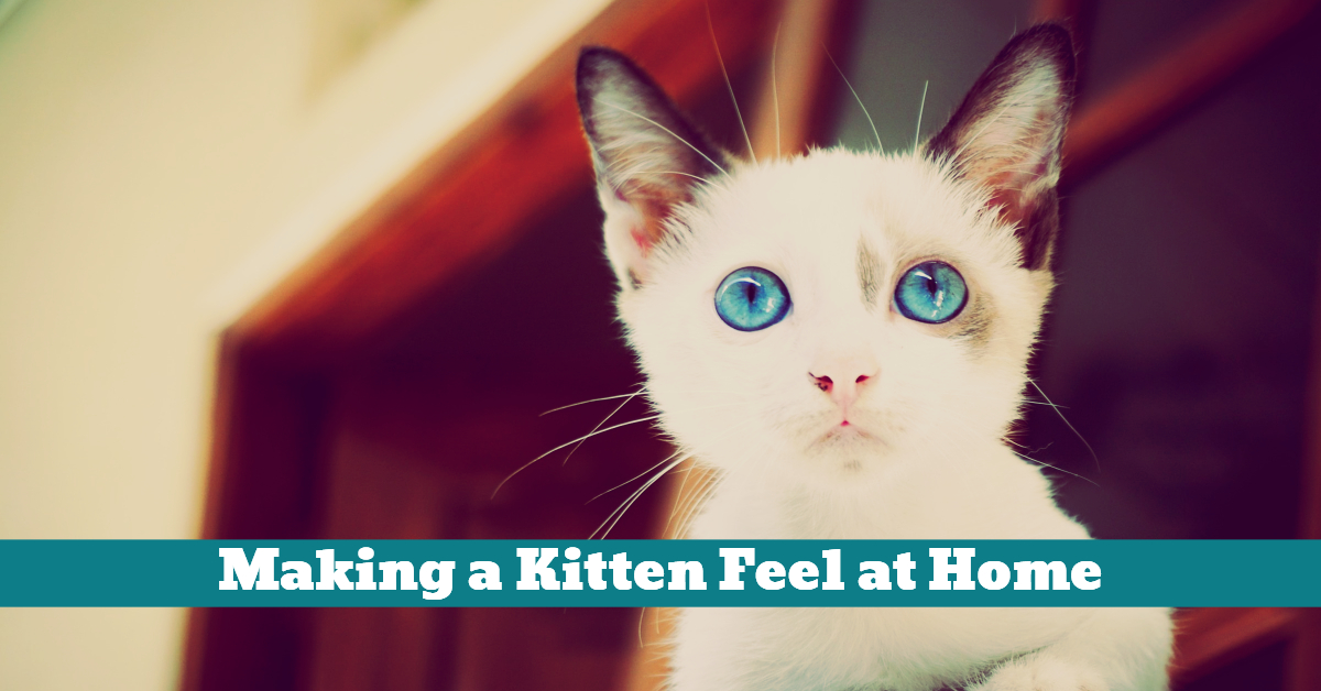 Cat_Kitten_Home_Grooming