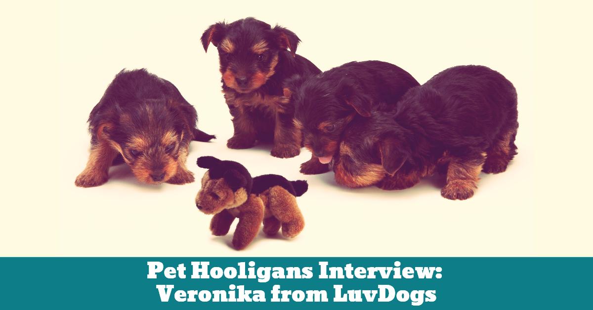Interview_Luv_dogs_Veronika_Jordan