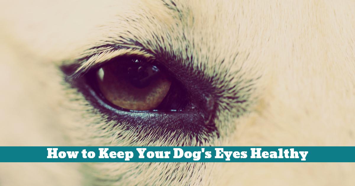 Dog_Eye_Tear_Stain_Ointment_Hair_Coat