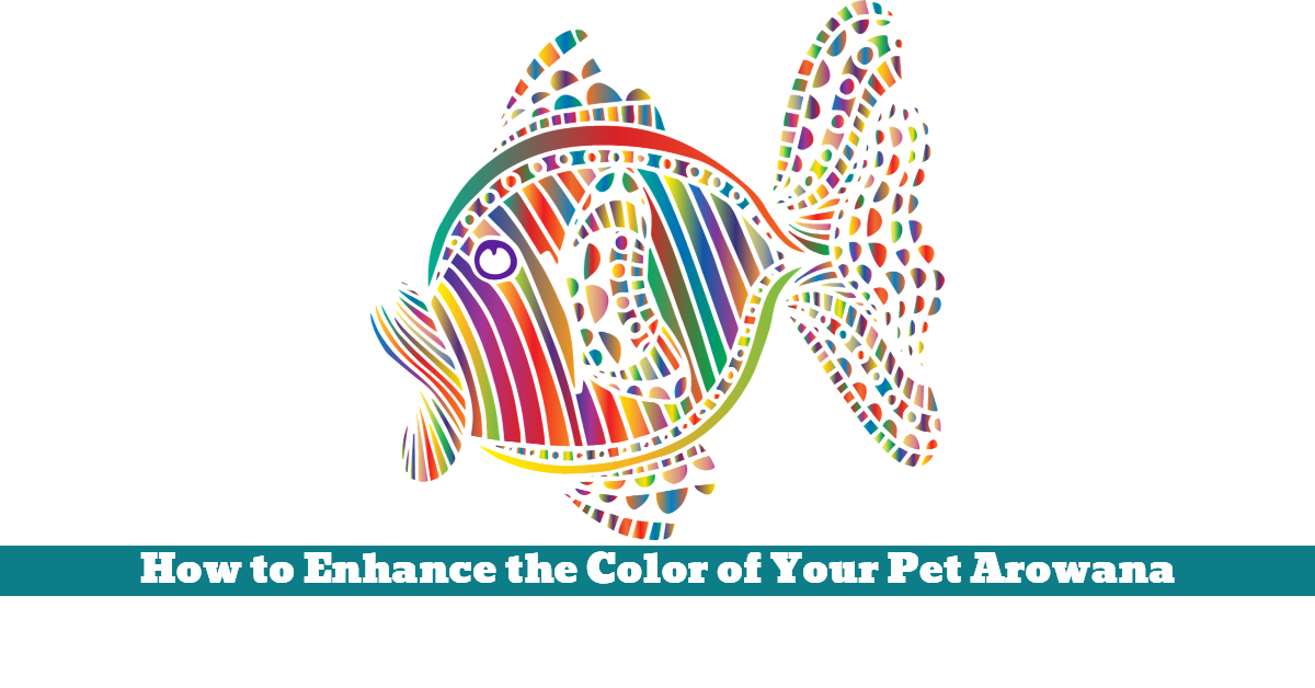 Pet_Fish_Arowana_Color_Colour_Enhance_Shine