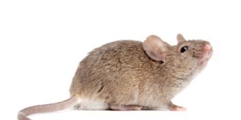 humane_mouse_trap