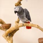 7 Reasons Why Birds Make Perfect Pets