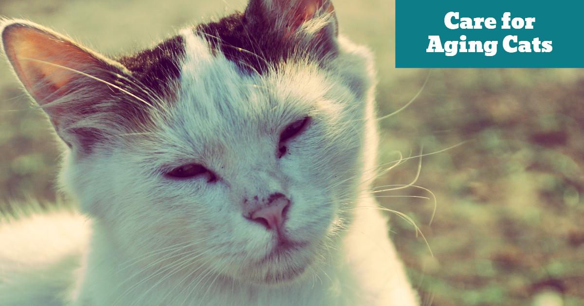 Pet_Cat_Care_Aging_Old