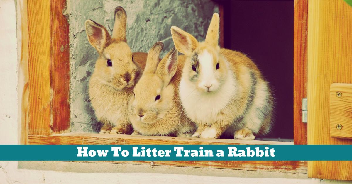 Pet_Rabbit_Litter_Training