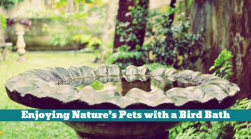 Enjoying Nature's Pets with a Bird Bath
