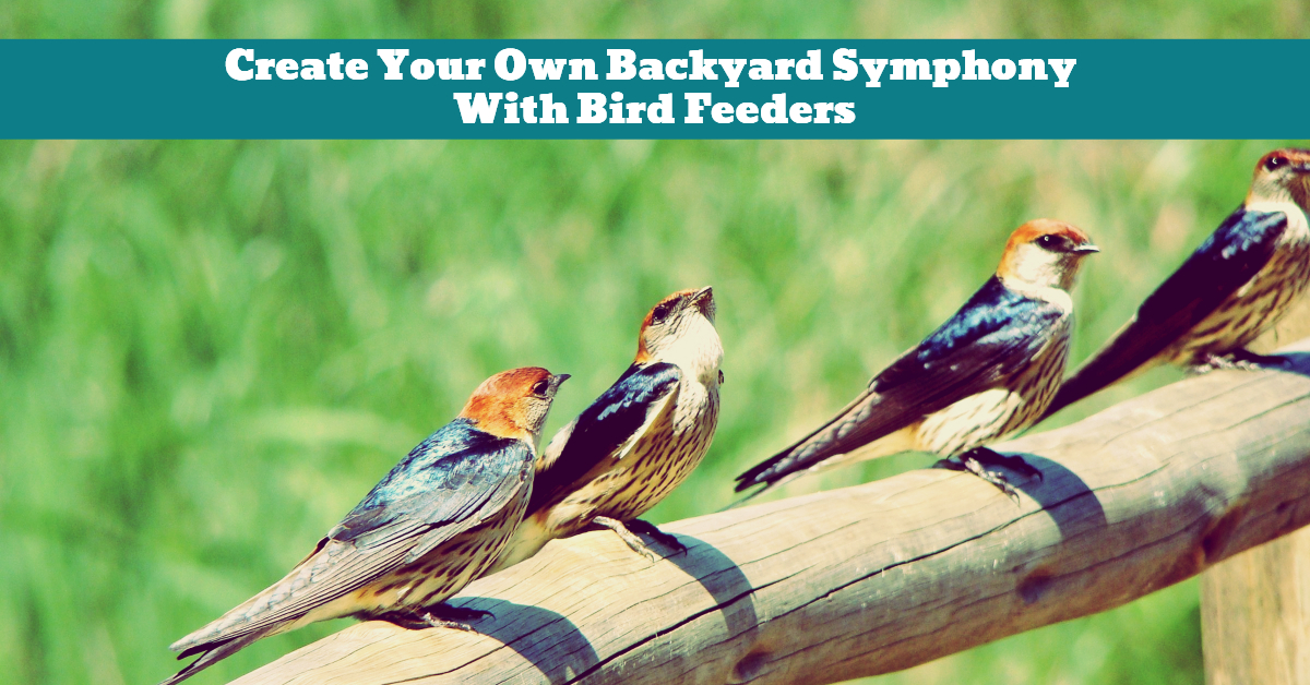 Bird_Feeder_Garden_Backyard_Song_Symphony