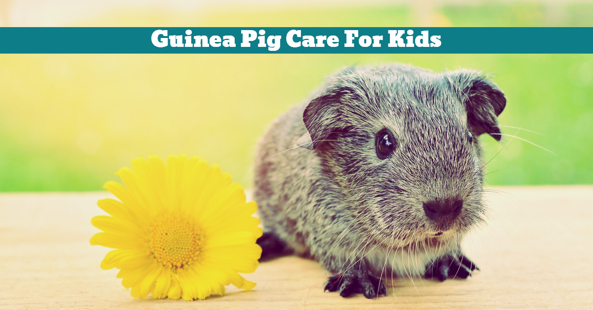 Pet_Guinea_Pig_Care_Kids_Children_Playtime_Cleaning