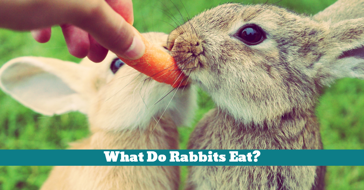 Rabbit_Diet_Nutrition_Hay_Vegetables_Pellets_Greens
