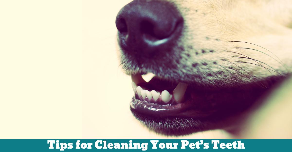 Dog_Dental_Health_Gums