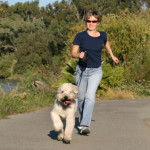 Dog Care: The Importance of Being Your Dog's Companion