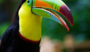 8 Interesting Facts About Rainforests