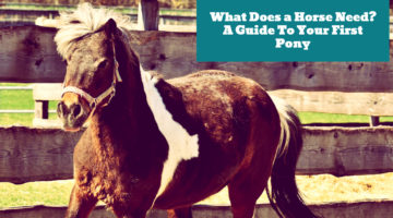 What Does a Horse Need? A Guide To Your First Pony
