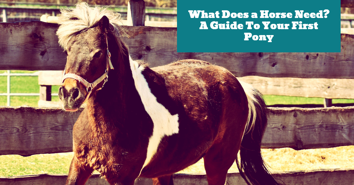 Horse_First_Pony_Guide