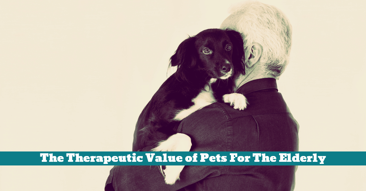 the value of pets Study by american humane association & pet care trust reveals that teachers see classroom pets having real educational, leadership & character-building value.