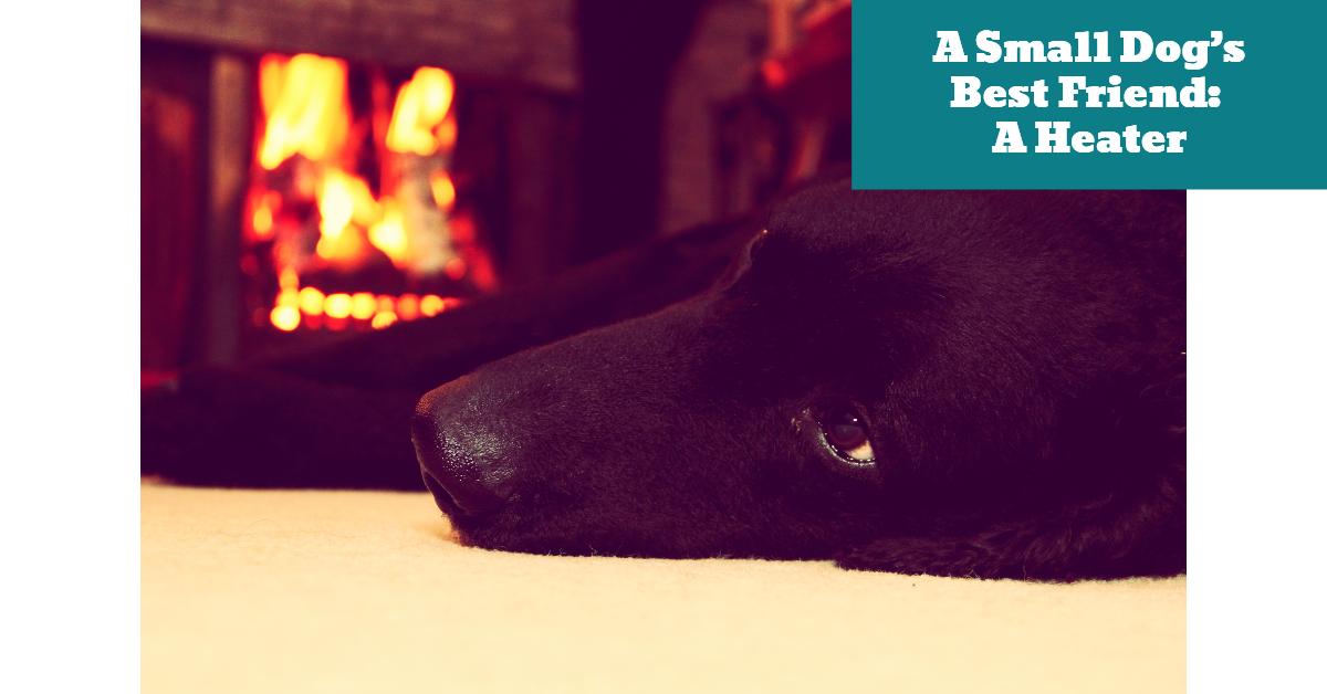 Dog_Small_Puppy_Heating_Heater_Pad