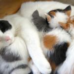 Kitten Health: How to Properly Wean Kittens