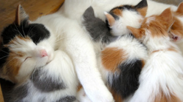 Kitten Health: How to Properly Wean Kittens
