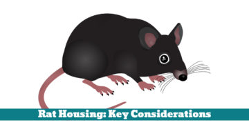 Rat Housing: Key Considerations