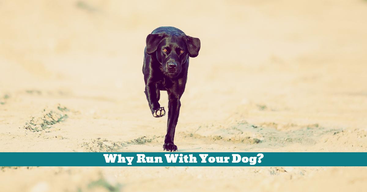 Dog_Run_Exercise_Play_Training_Teaching_Safety