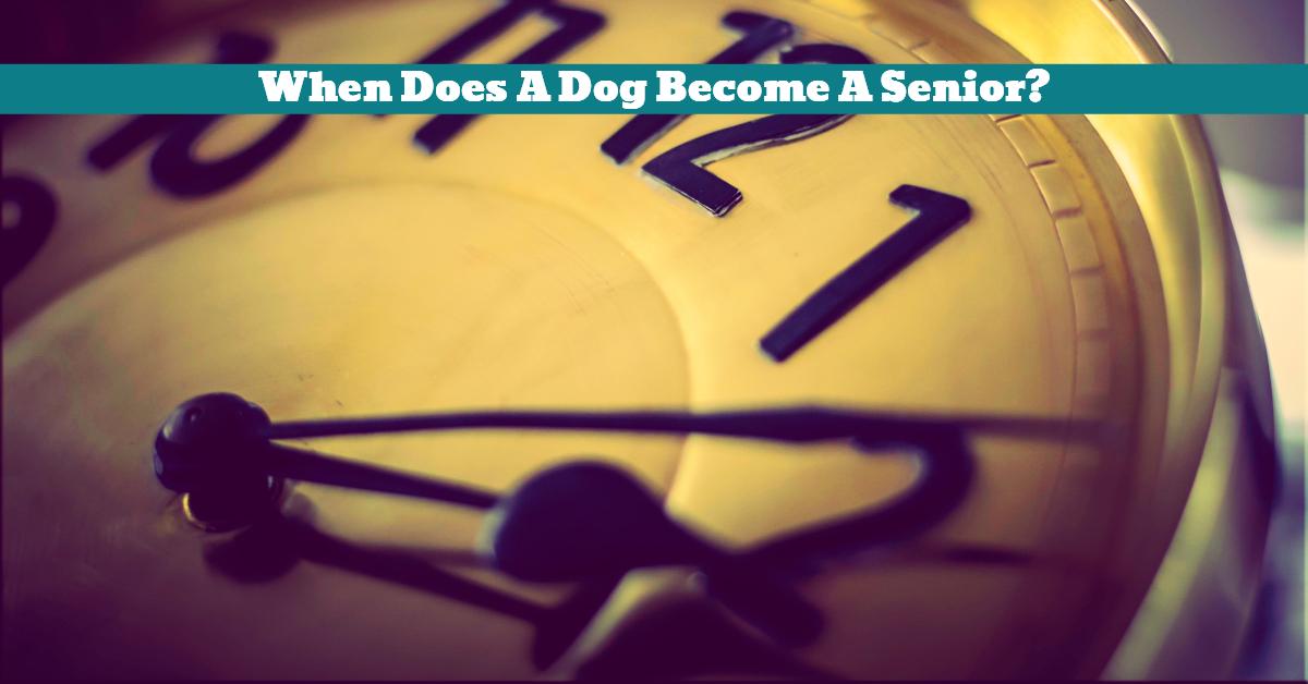 Dog_Senior_Aged_Environmental_Effect