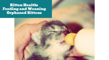 Kitten Health:  Feeding and Weaning Orphaned Kittens