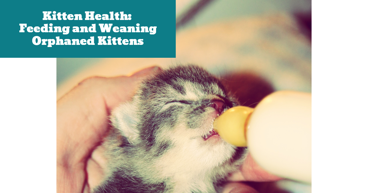 Kitten_Orphan_Health_Weaning_Milk_Replacer