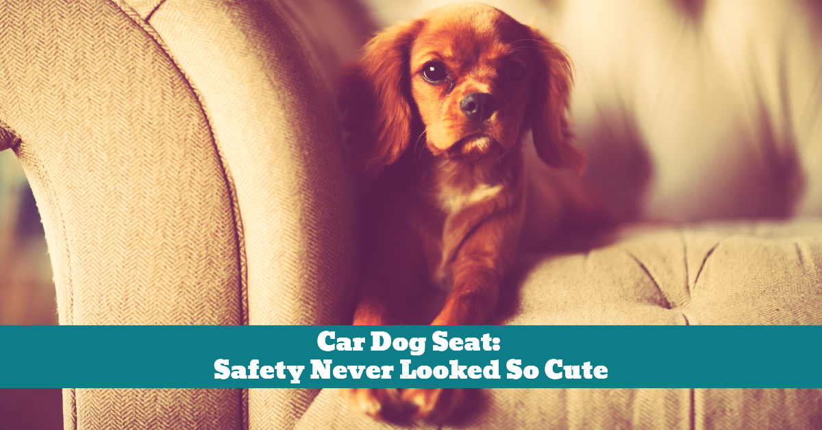 Car_Dog_Seat_Safety_Travel_Transport