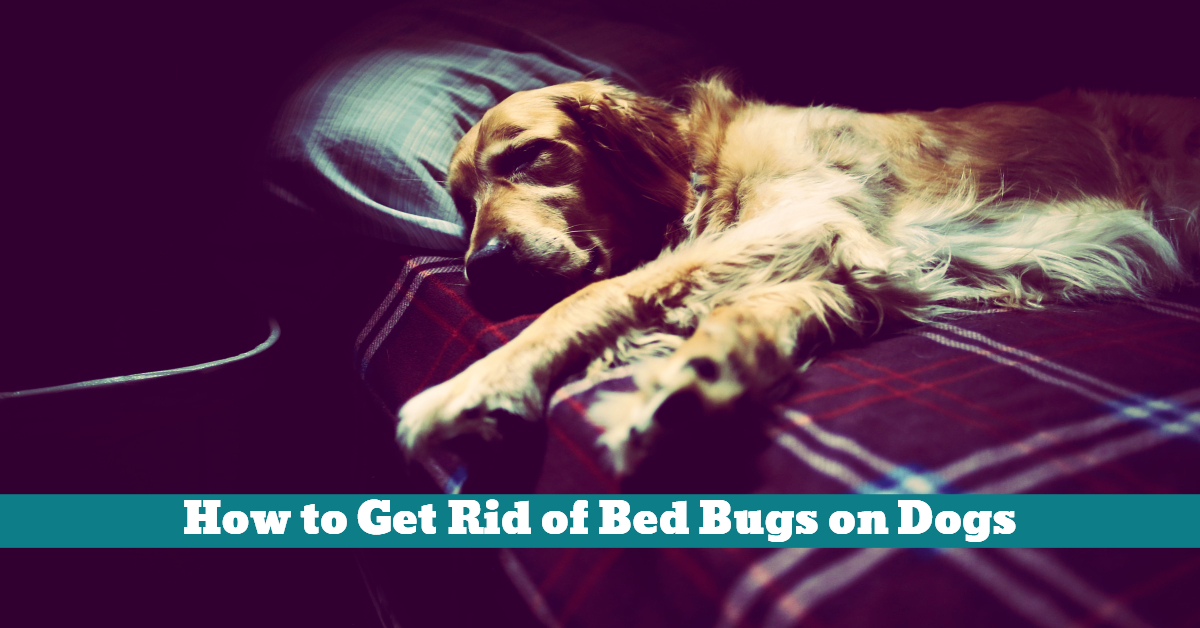 will bed bugs die in cold weather