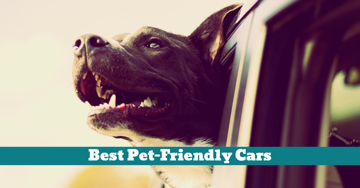 Pet_Friendly_Cars_Vehicles_Hatchback_
