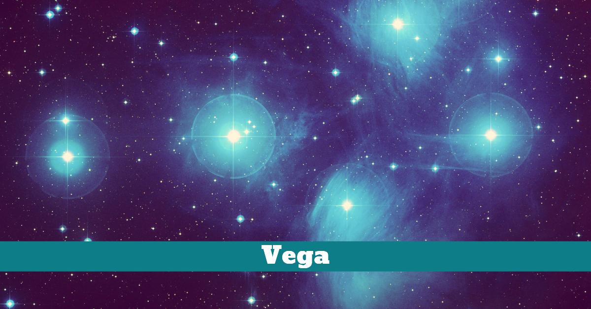 Pet_Dog_Vega_Labrador_EmmaSeyes