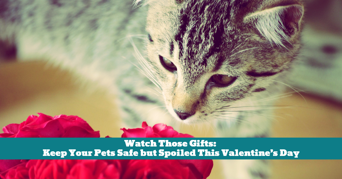 Pet_Valentine_Gifts