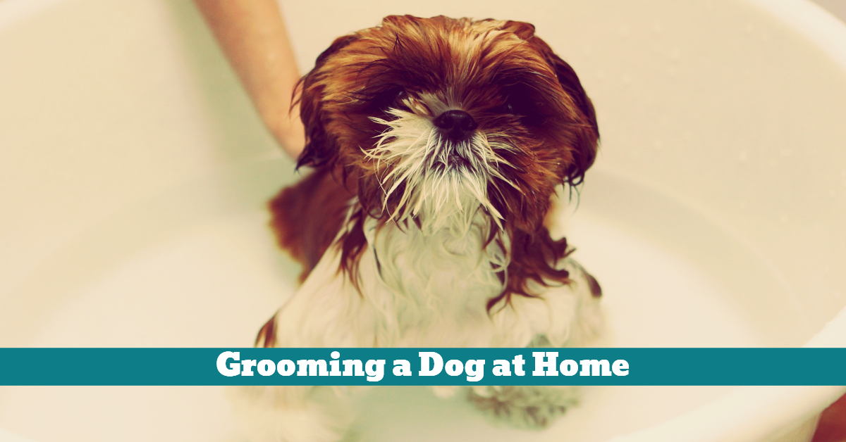 Dog_Grooming_Home_Booster_Bath
