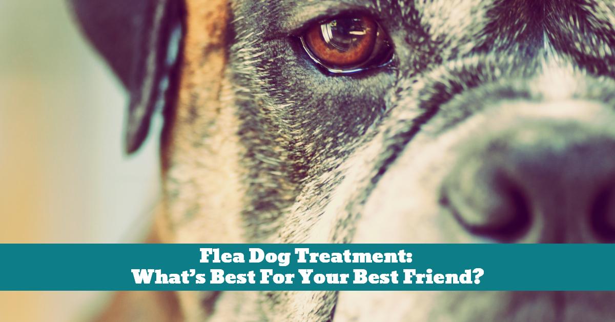 Dog_Fleas_External_Parasite_Shampoo_Treatment