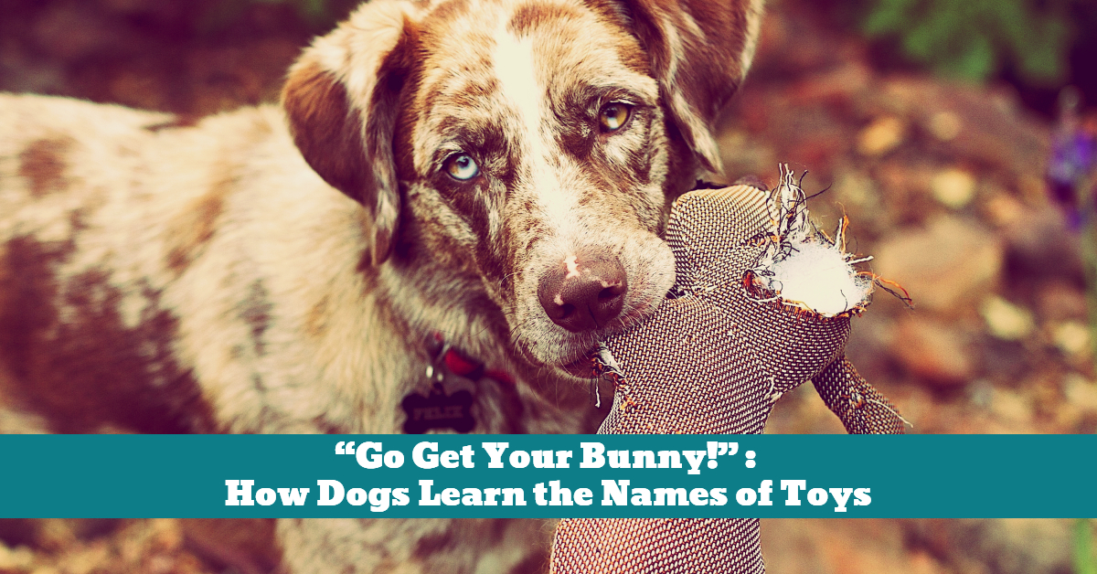 Dog_Learning_Names_Toys_Objects